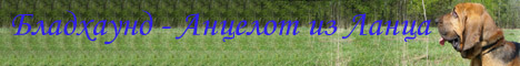 Бладхаунды. Персональная страница бладхаунда по кличке Анцелот из Ланца