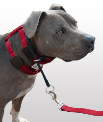 Ошейник Цезаря Миллана Illusion Collar Cesar Millan